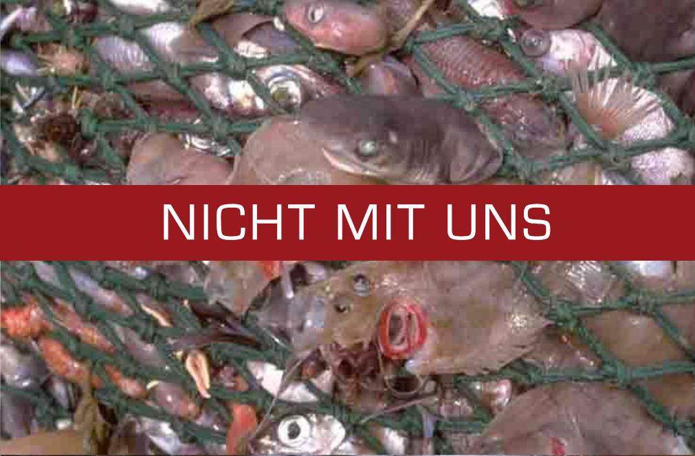 Wir achten darauf nur Produkte aus artgerechten und kontrollierten Fang anzubieten.